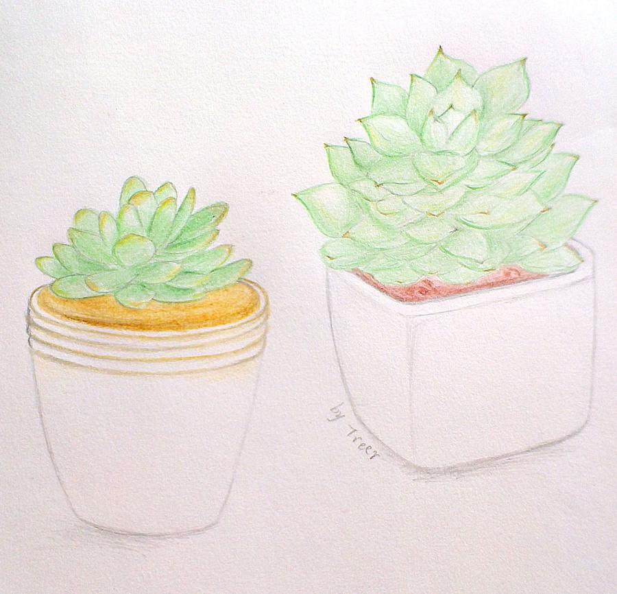 萌萌的多肉植物·我的彩铅画练习作品|绘画习作|插画