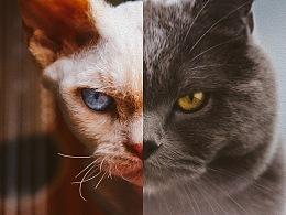 猫的私房 第二季