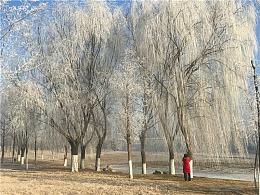 刘勇良纪实手机摄影:银色世界