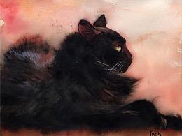 第二百七十期 猫色
