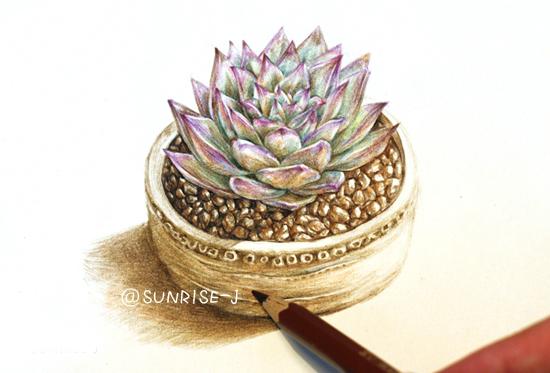 【@sunrise-j】彩铅手绘多肉植物|商业插画|插画|805