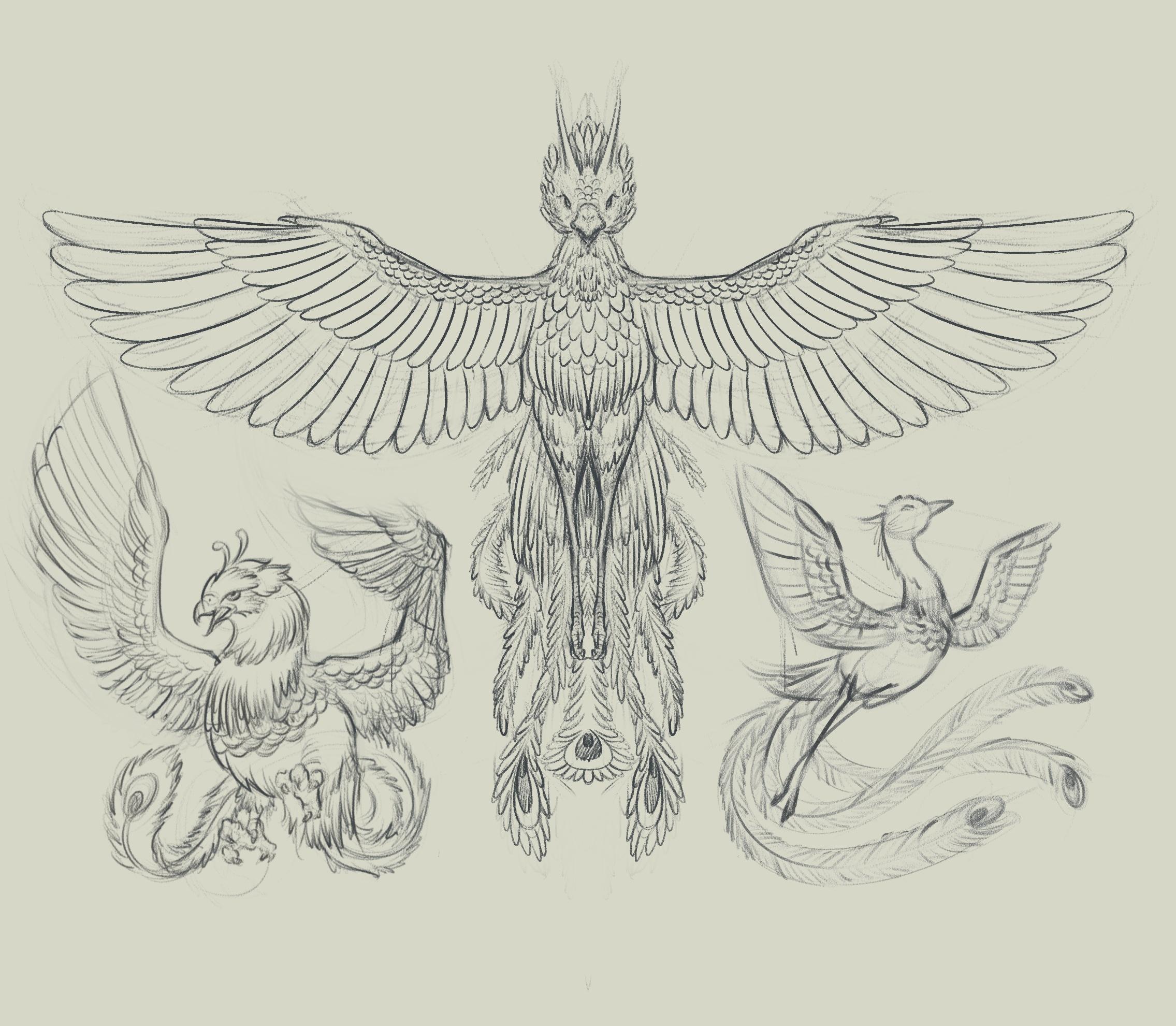 凤凰-手绘插画 部分临摹