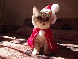"""圣诞版""""方块"""""""