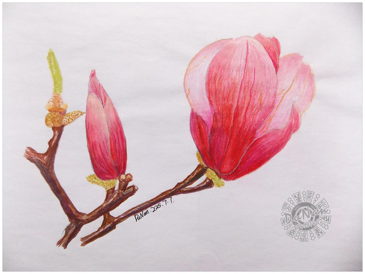 高清壁纸图片手绘花