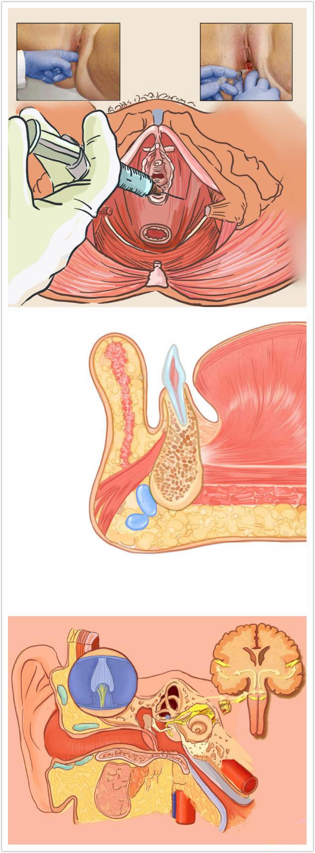 小清新的解剖医学插画