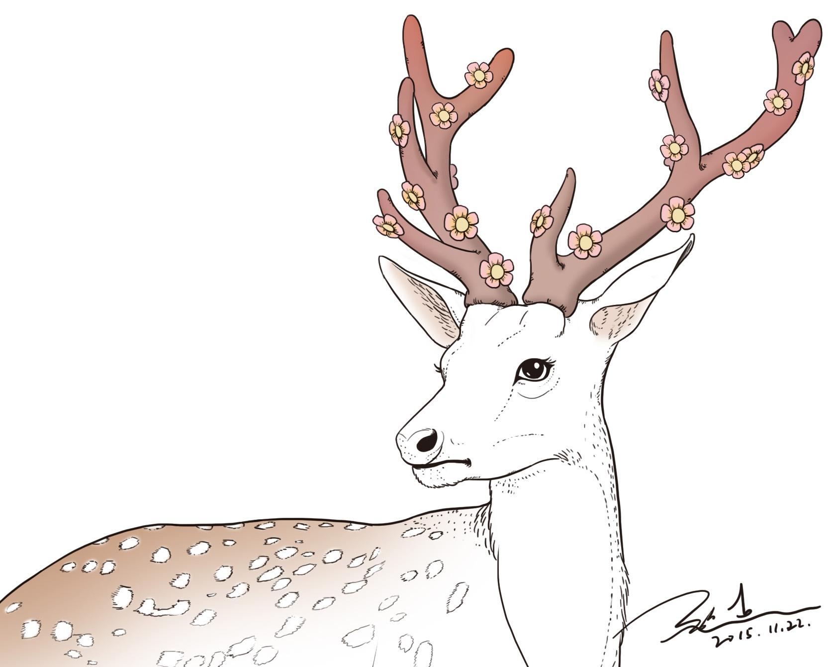 野生动物线描练习