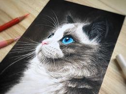 高冷的布偶猫
