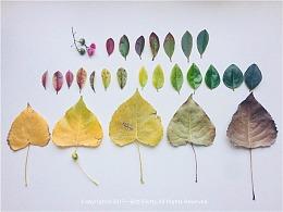 四季如同一叶菩提