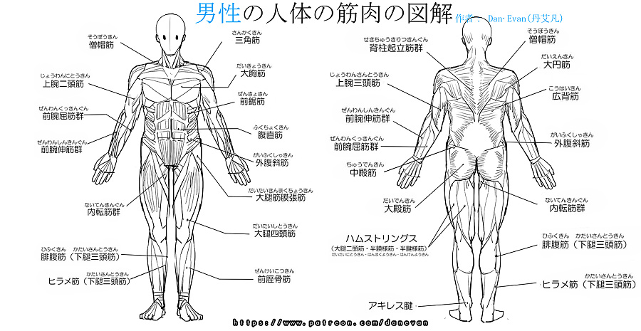 肌肉,动画,人体v肌肉漫画&女性男性の插画图解乳漫画耽美图片