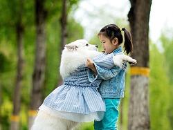 银狐犬汤圆-帝都外景写真
