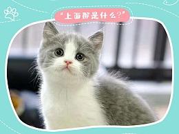 宠物猫详情页