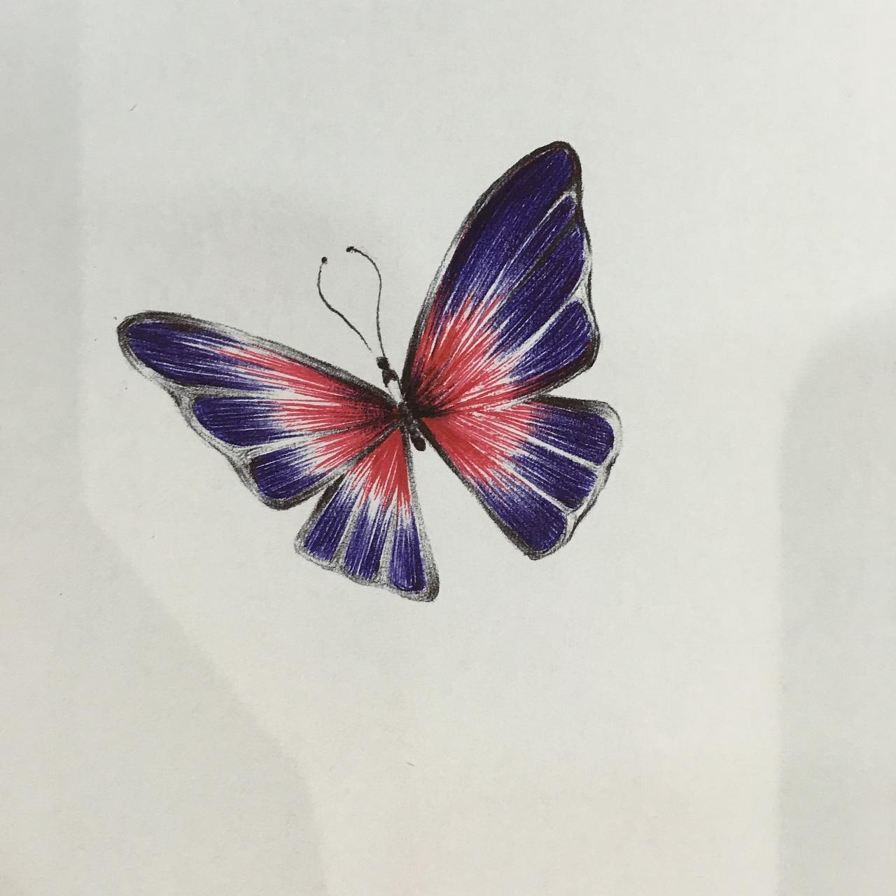 小蝴蝶图片 388788 1280x1280