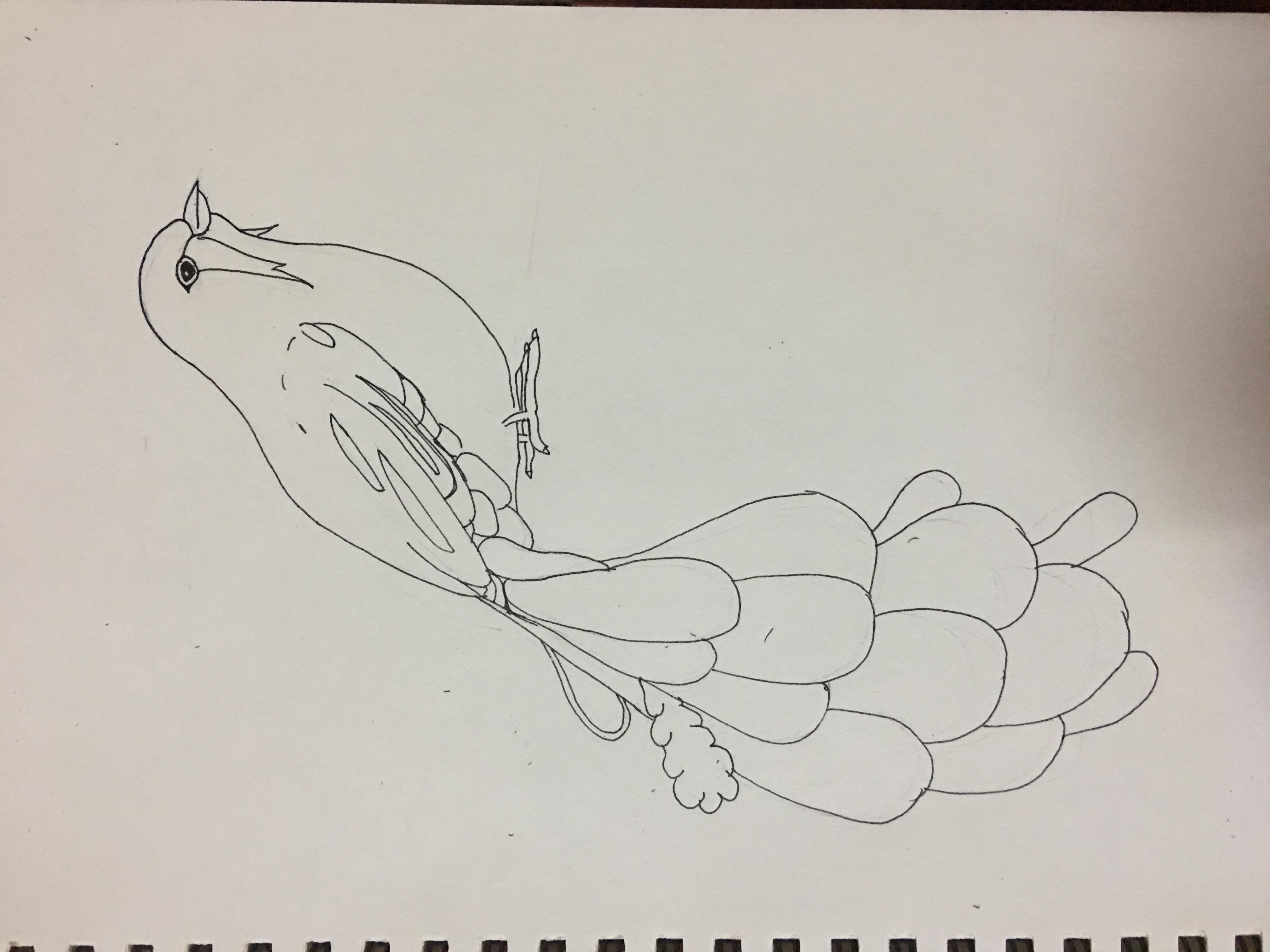 黑白线条插画 鸟羽 纯艺术 钢笔画 拥抱沙滩的鱼