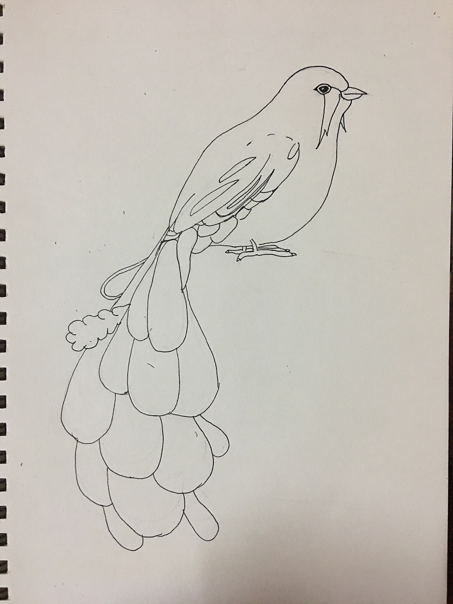 黑白线条插画 鸟羽
