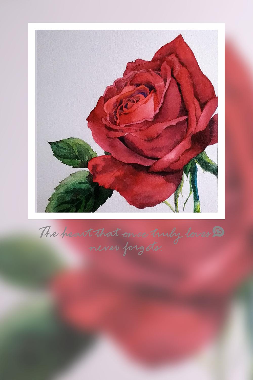 夜光下的红玫瑰 rose