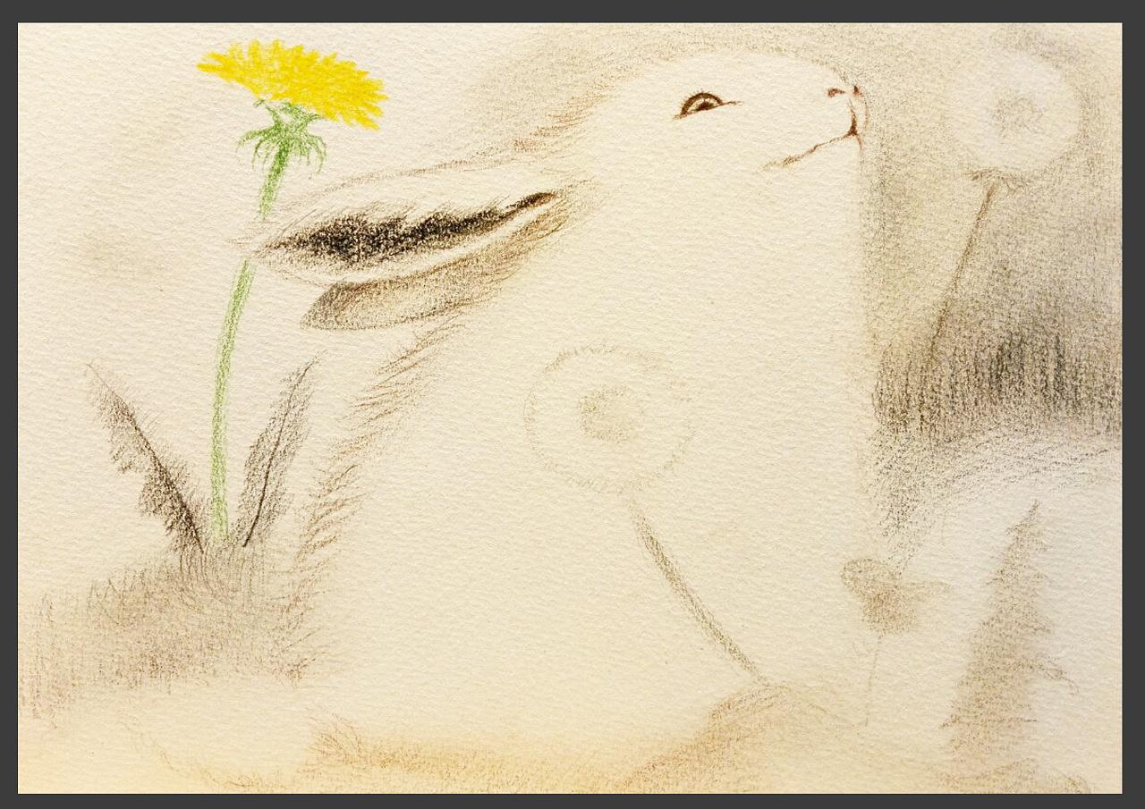 彩铅兔子插画 手绘儿童插画