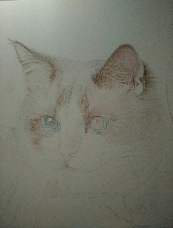 彩铅手绘----《可爱的喵星人》—mm|彩铅|纯艺术|画