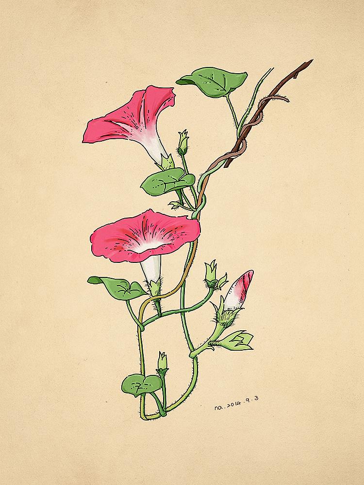 植物手绘练习