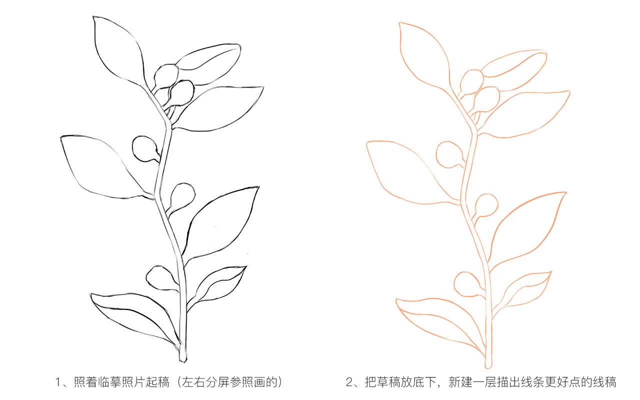 手绘练习-植物|插画|插画习作|米朵厄夕 - 临摹作品