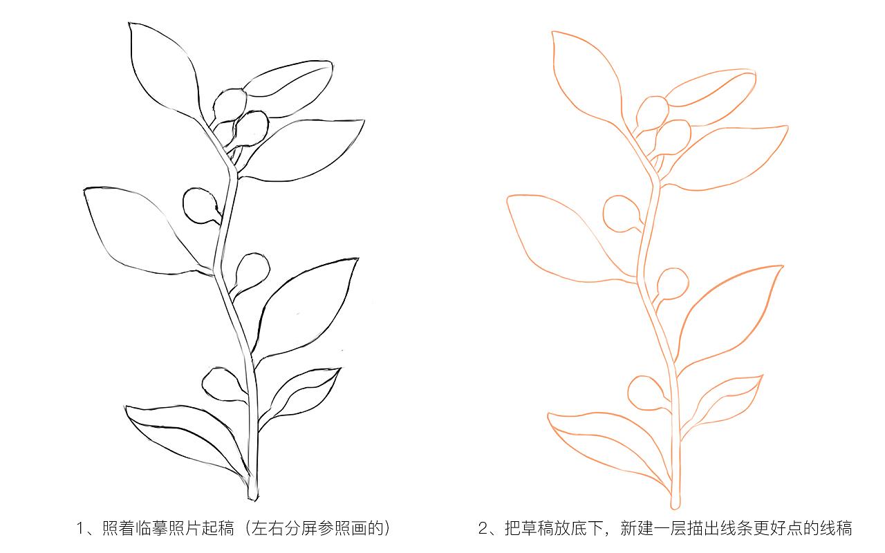 手绘练习-植物