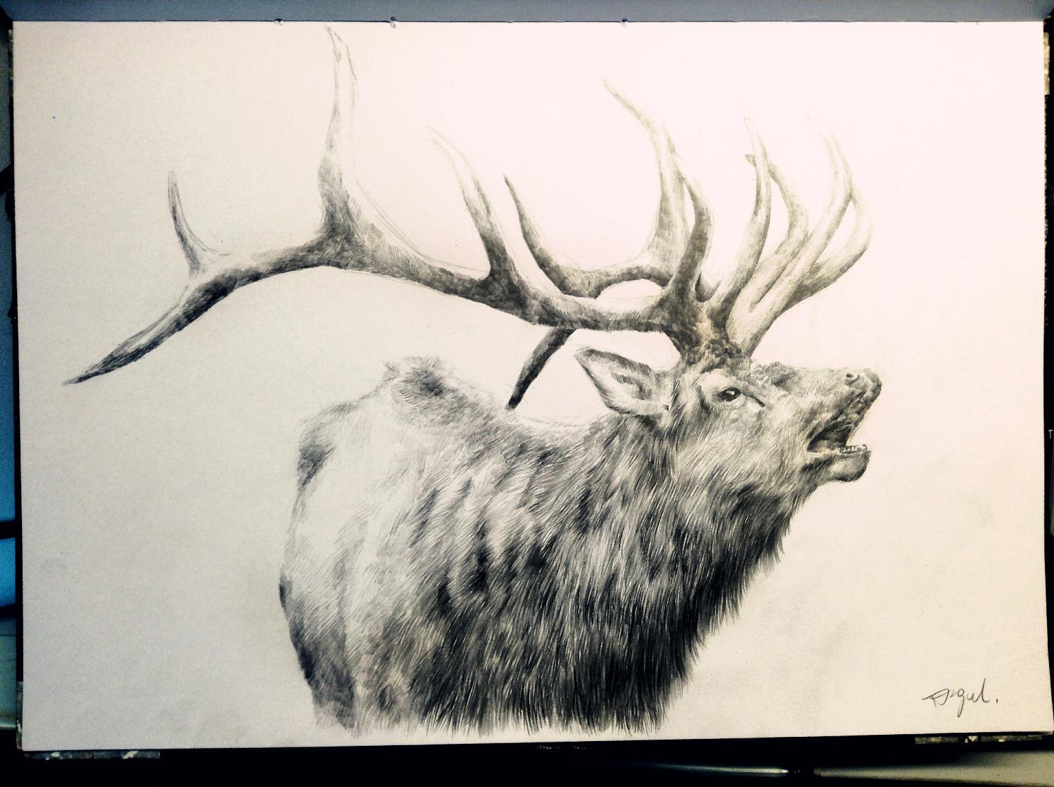 唯美麋鹿手绘铅笔图