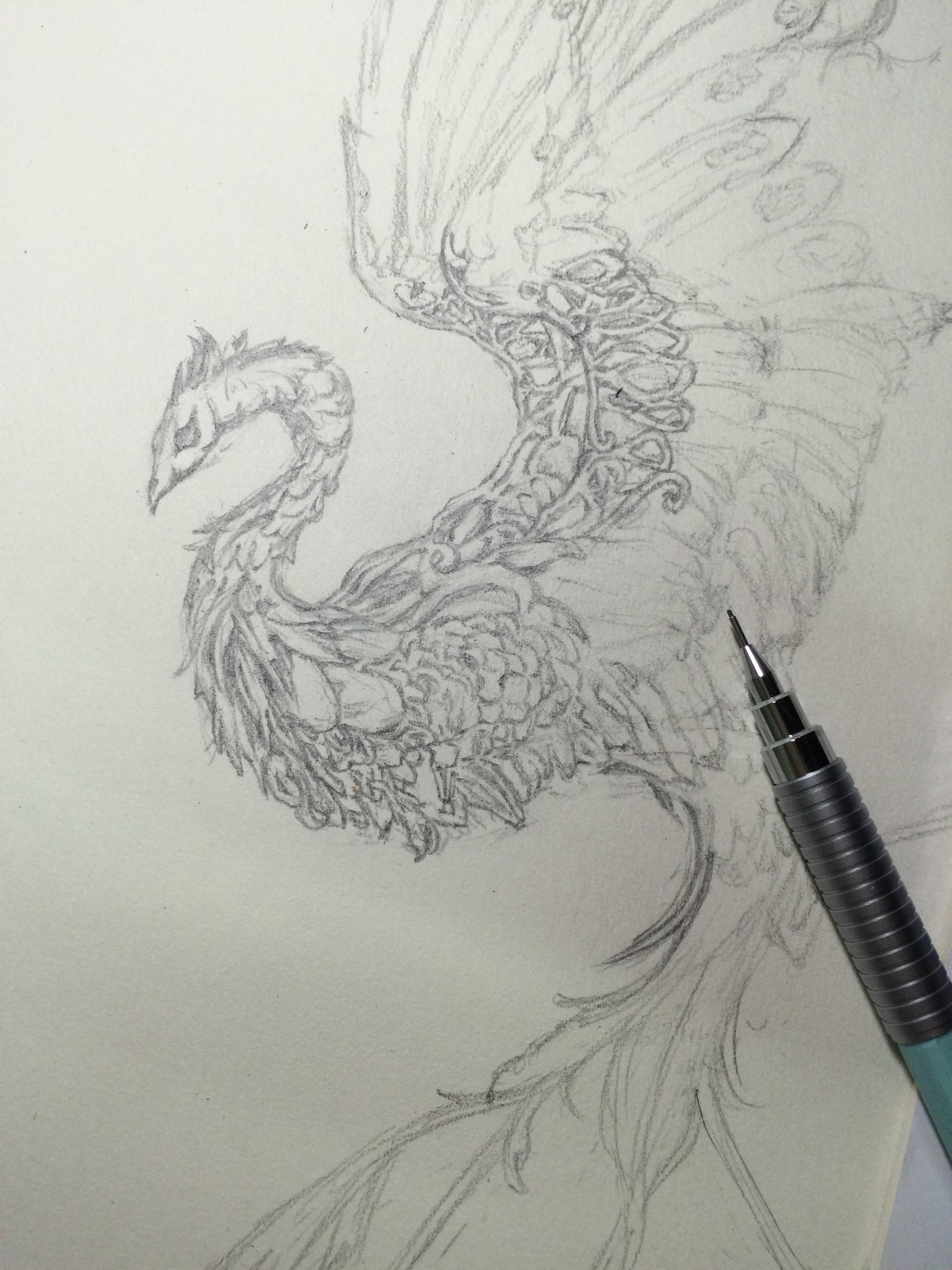 创意凤凰手绘