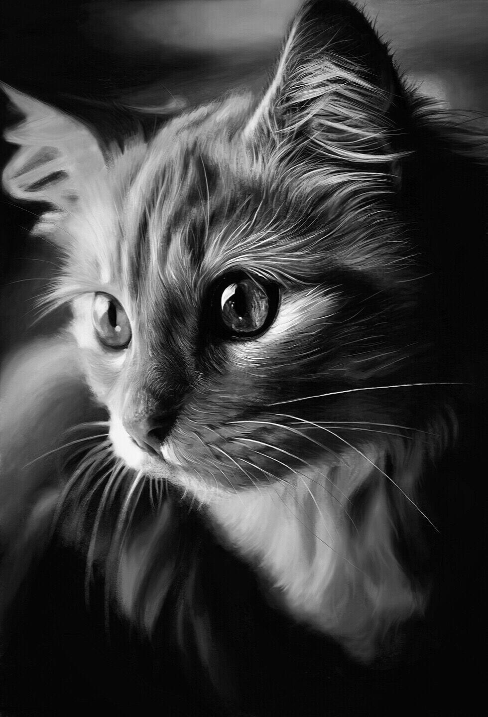 手绘练习—猫