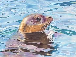 彩铅画《海豹》