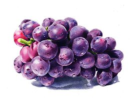 驴大萌彩铅手绘——24节气水果图鉴