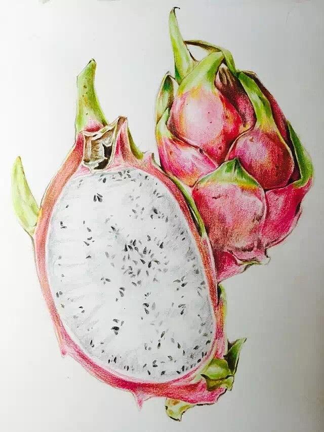 水果彩铅.