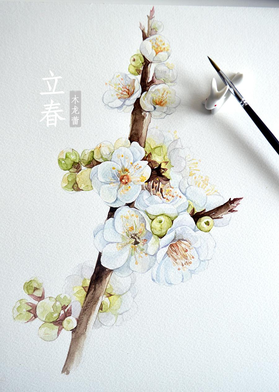 【立春】原创手绘水彩梅花