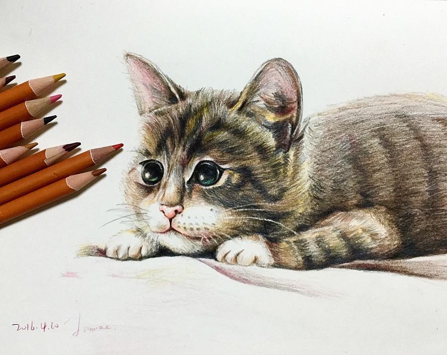 色铅笔手绘 喵|插画习作|插画|naxiemeihaoa