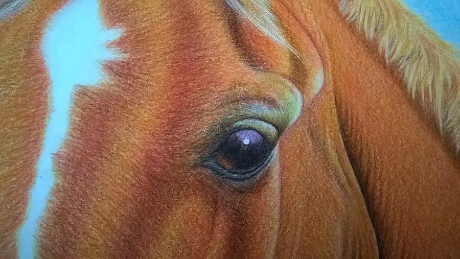 彩铅马|彩铅|纯艺术|tekken8