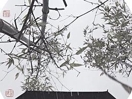 【摄影】南方的冬天没有雪