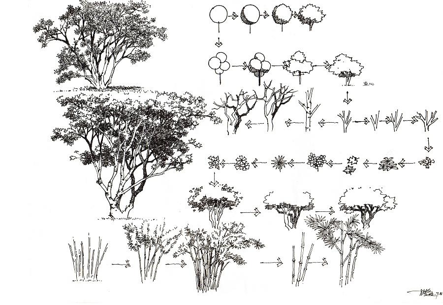 匠人营国|景观手绘植物