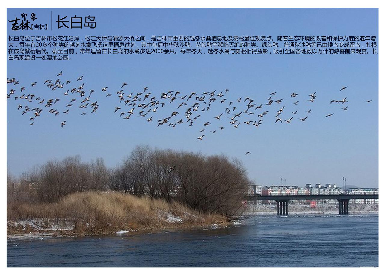 截至目前,常年逗留在长白岛的水禽多达2000余只.