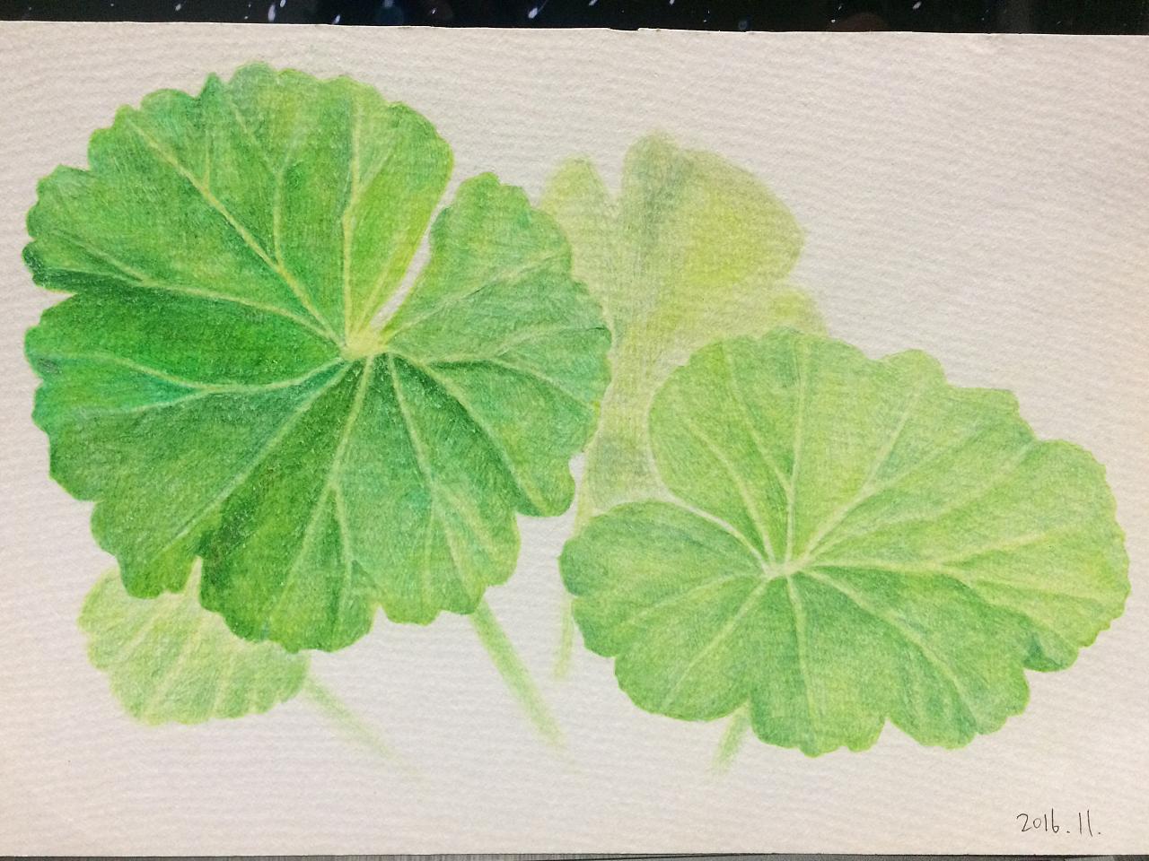彩铅草植物手绘教程