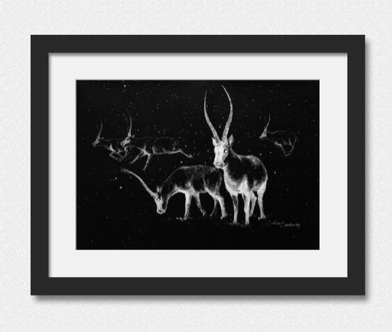 黑色卡纸上的涂改液-五只藏羚羊|涂鸦/潮流|插画|mr