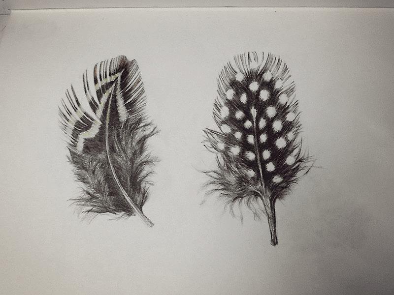 彩铅手绘羽毛图片