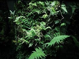 雨林造景 ‧ 来自安第斯山的私语