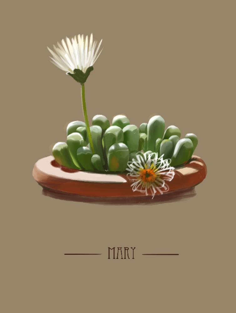 多肉植物小画