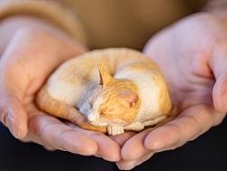 末匠丨森口修の猫之睡眠团猫