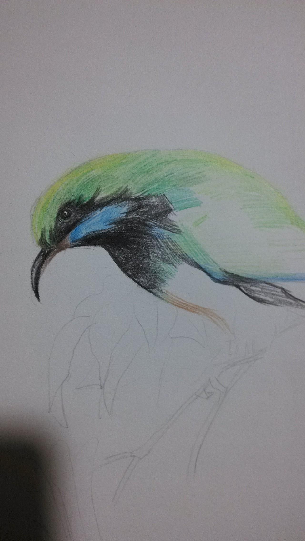 彩铅画,小鸟一枚