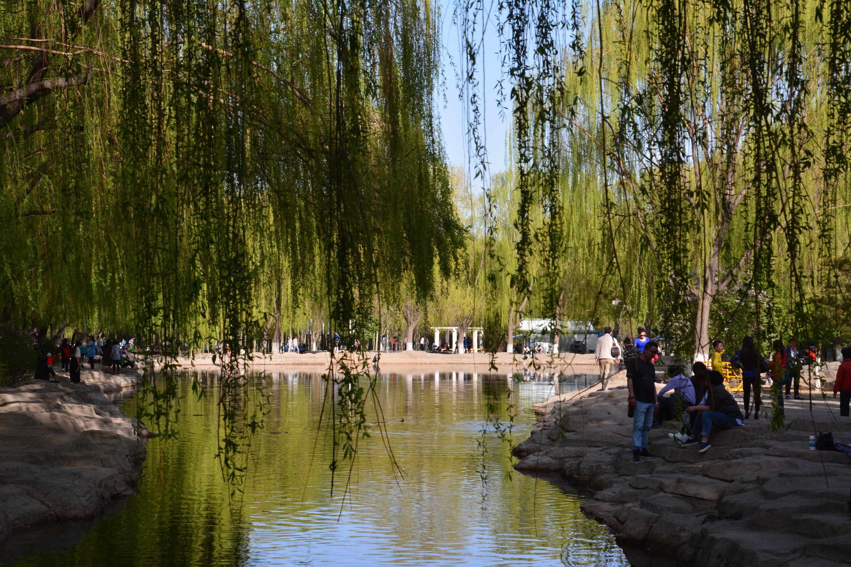 包头阿尔丁植物园的美景图片