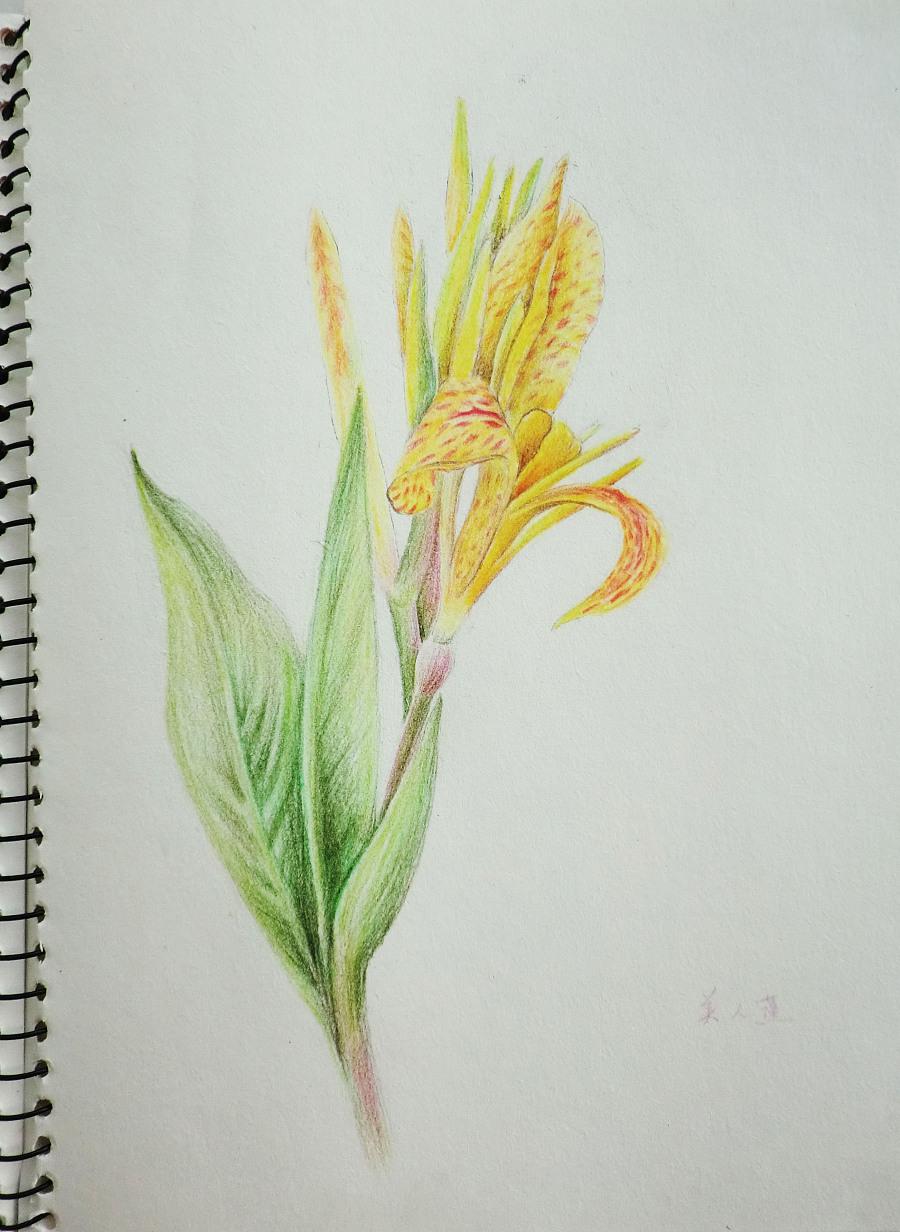 彩色铅笔手绘画 ---花
