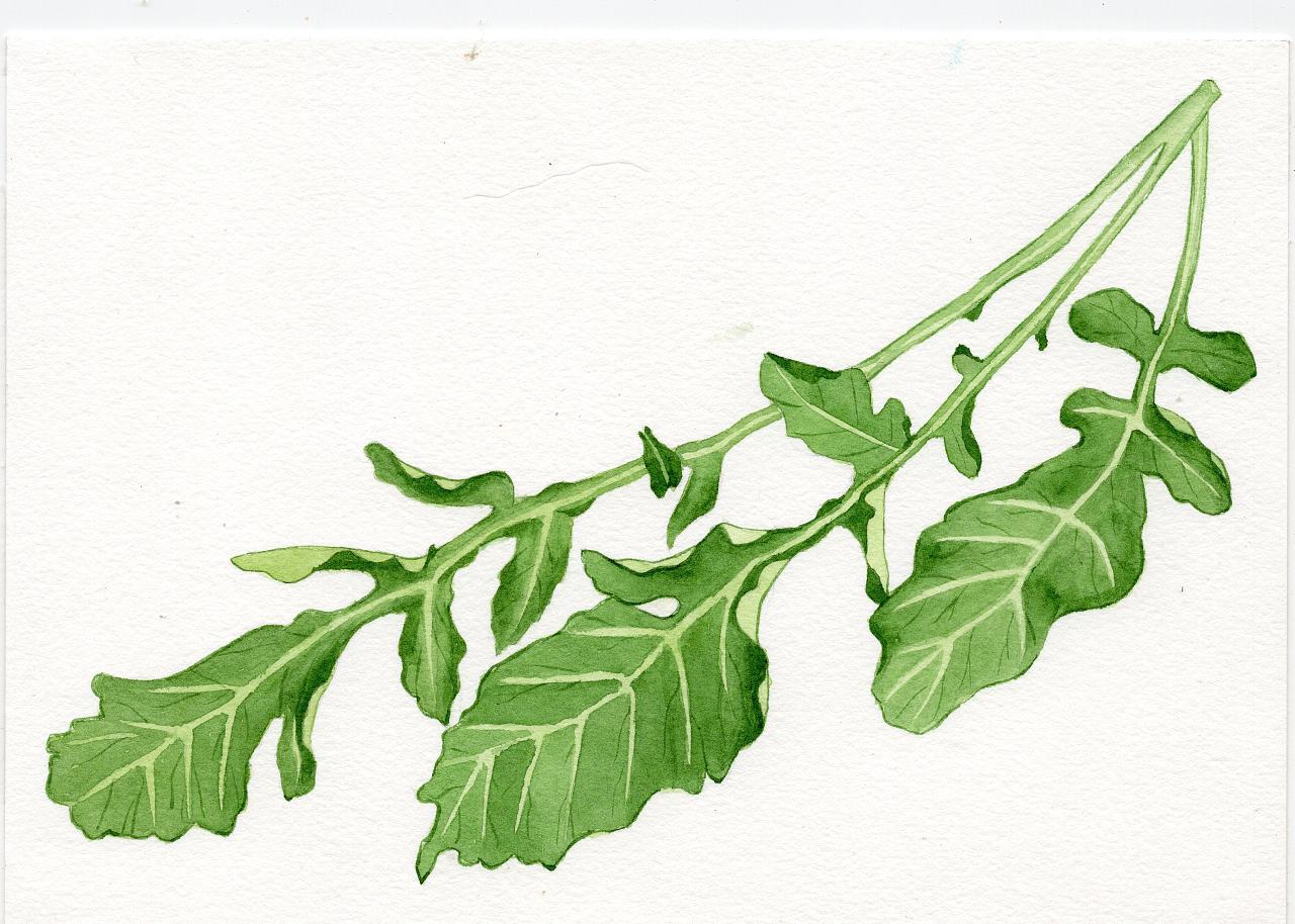 水彩画植物花卉图片-水彩画图片植物简单-森系小清新图片