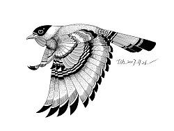 餐厅插画-鸟