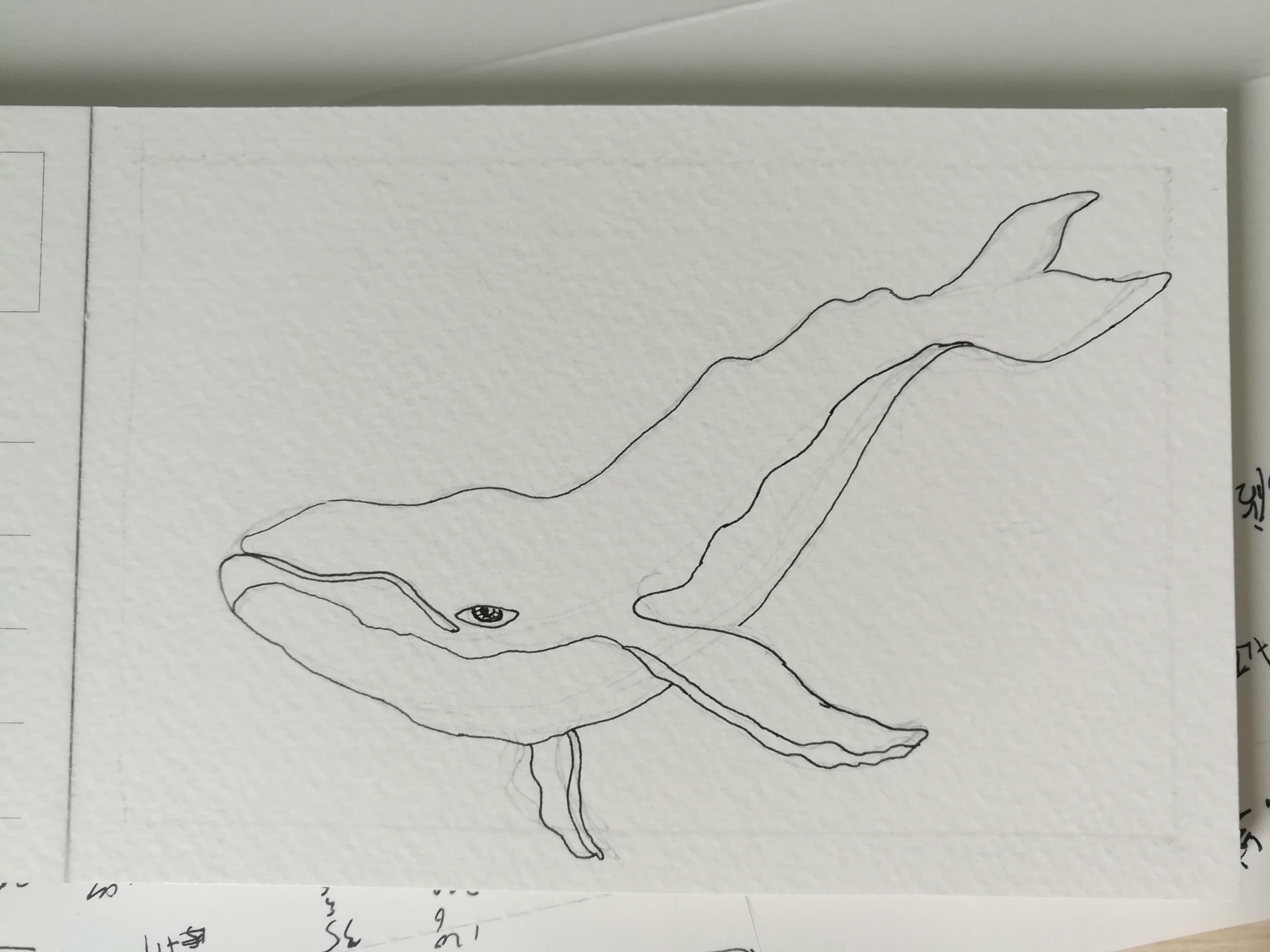 铅笔插画手绘鲸