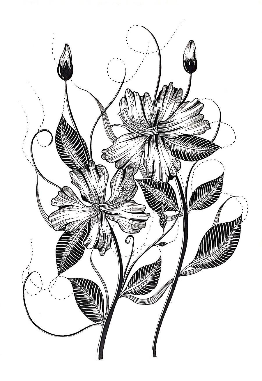 黑白植物线描装饰画_简单好看黑白线描图片植物_动物黑白线描装饰画_微信公众号文章
