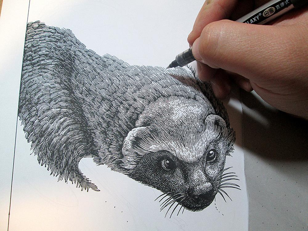 《蜜獾》手绘      尺寸:a4     工具